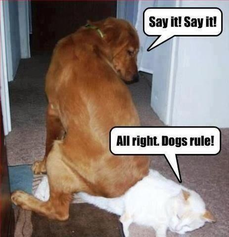 all-right-i-will-say-it-dogs-rule