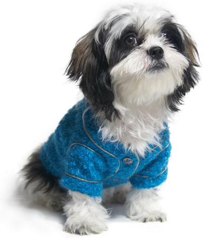 bluesweaterdog