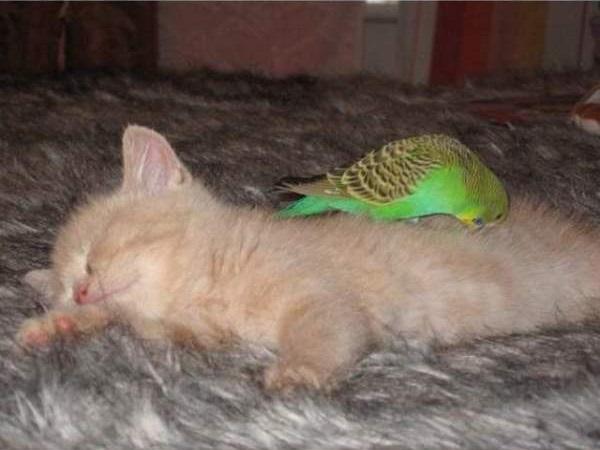 cat-bird10