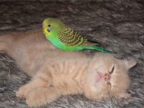 cat-bird12