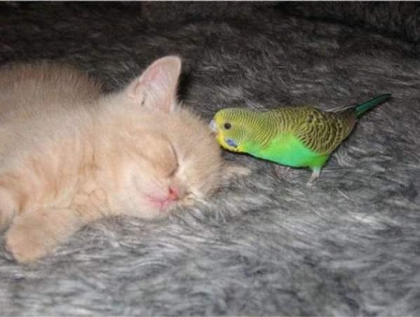 cat-bird13