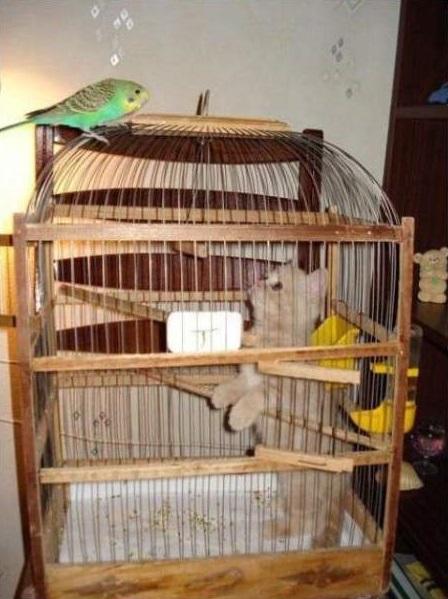 cat-bird14