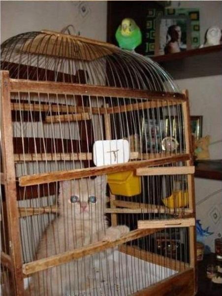 cat-bird15