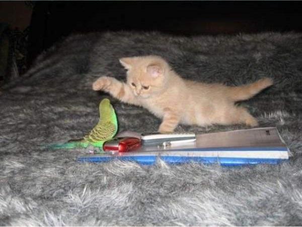 cat-bird4