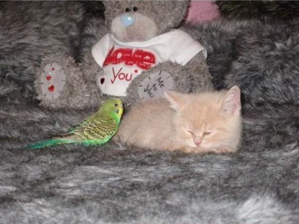 cat-bird5