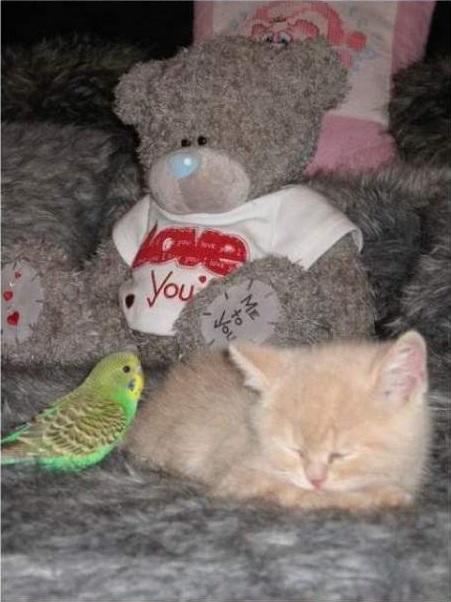 cat-bird6