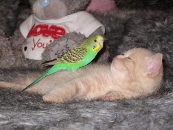 cat-bird7