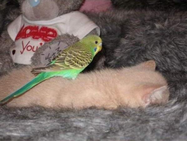 cat-bird8