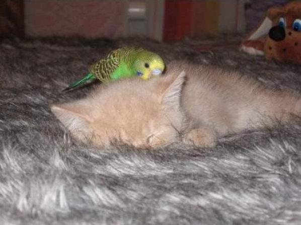 cat-bird9
