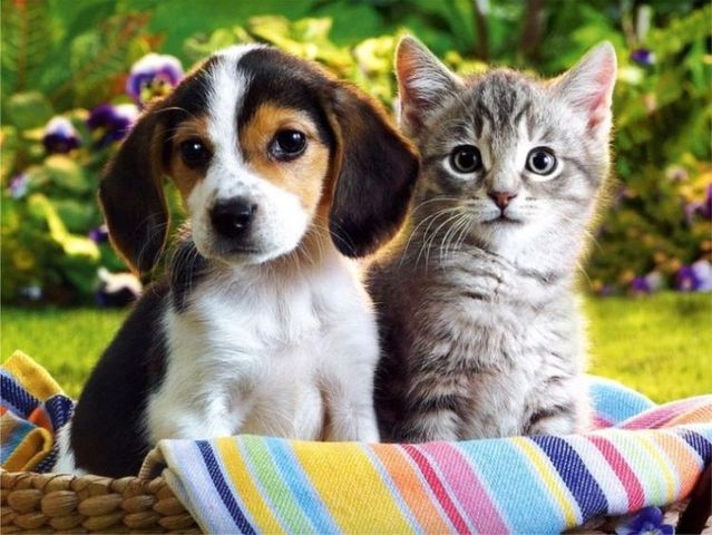 cats-and-dogs (1)