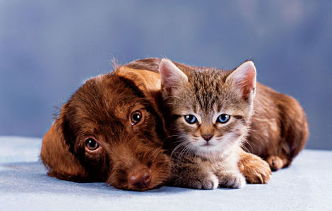 cats-and-dogs (4)