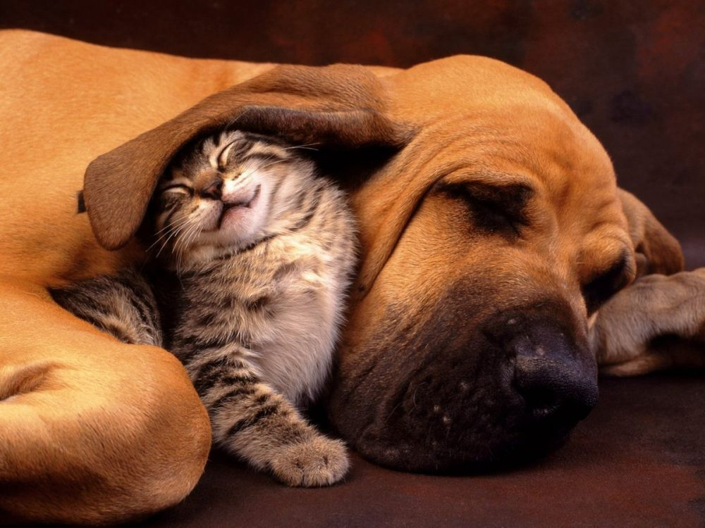 cats-and-dogs (5)