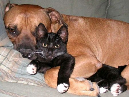 cats-and-dogs (7)