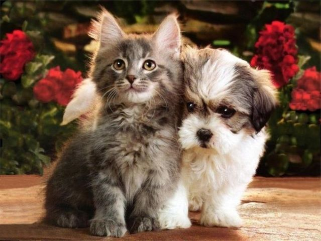 cats-and-dogs (8)