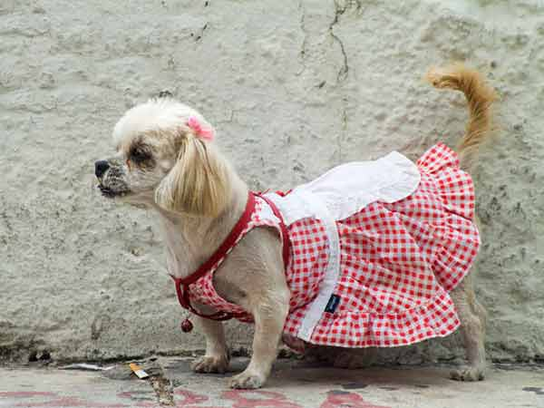 dog-clothes