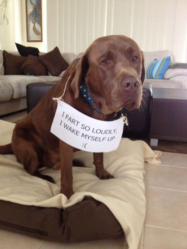 dogs-who-are-shamelessly-proud-of-what-they-just-did-20