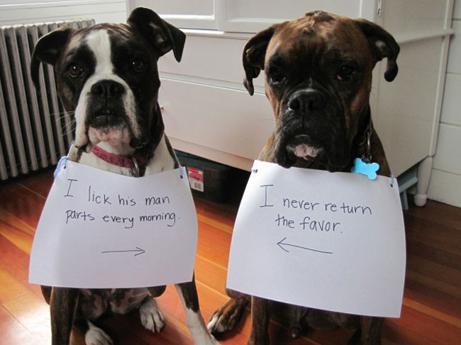 dogs-who-are-shamelessly-proud-of-what-they-just-did-26
