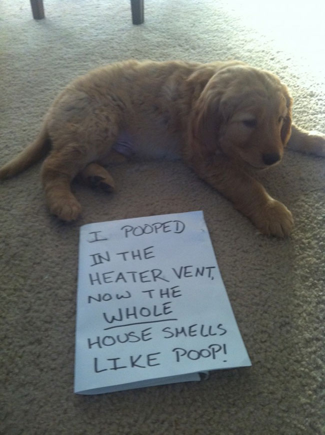 dogs-who-are-shamelessly-proud-of-what-they-just-did-33