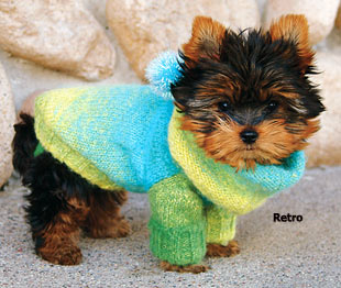 p_26767_35943-dog-clothing