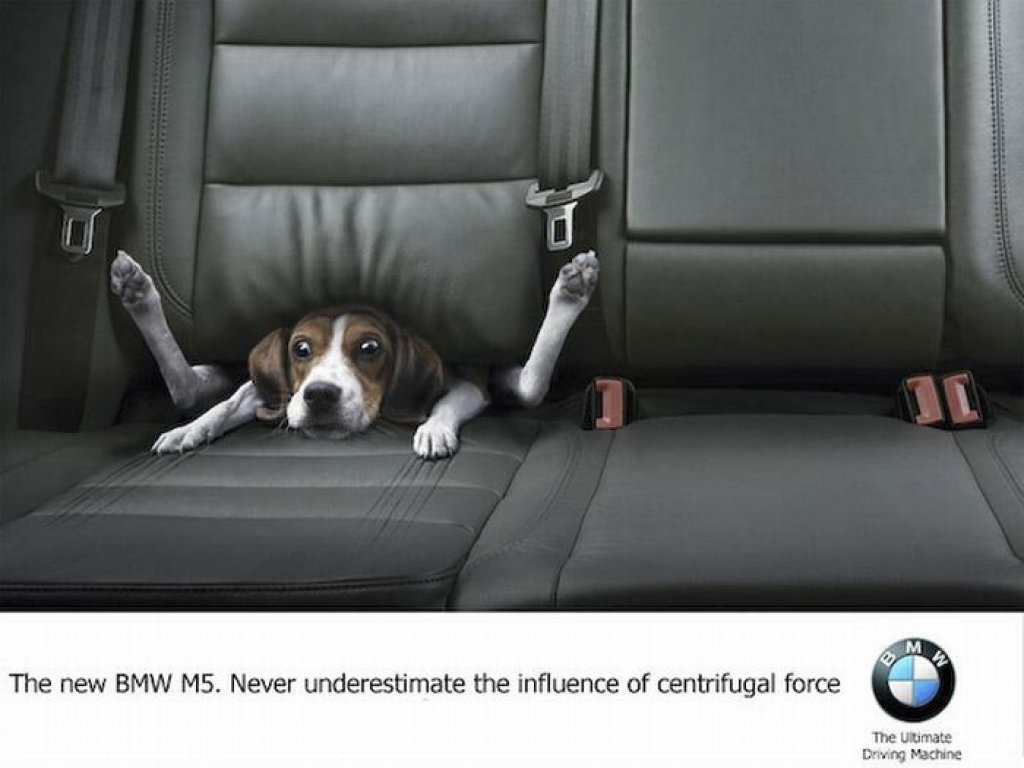 the_best_ads_with_dogs_15