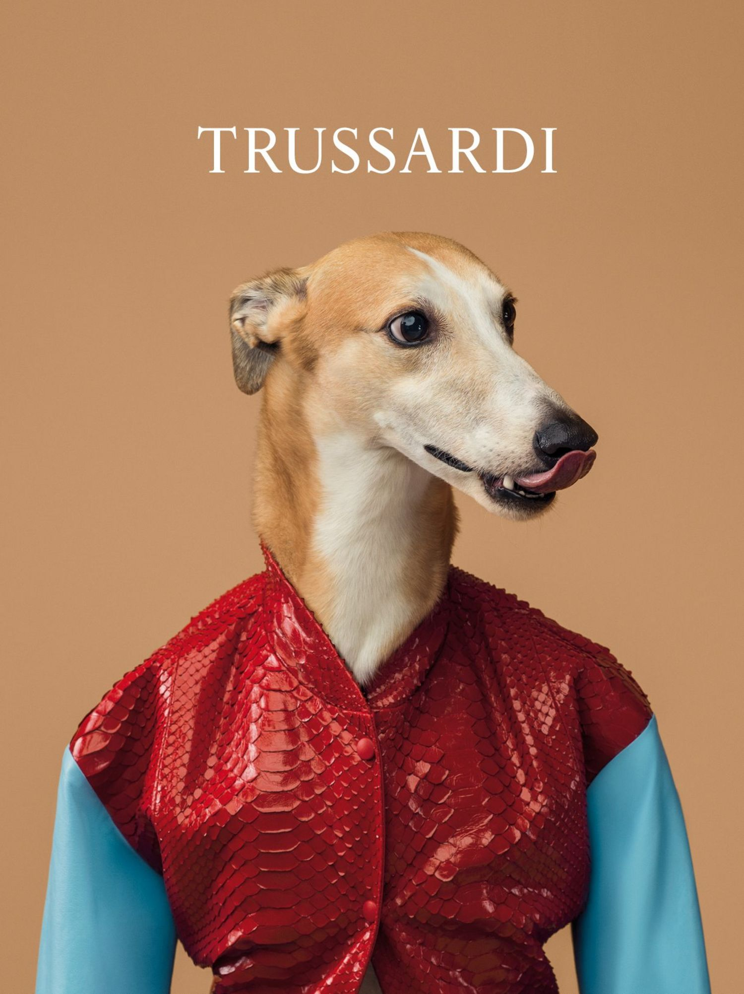 trussardi-dog-2-main