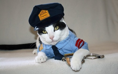 Police Cat in Uniform