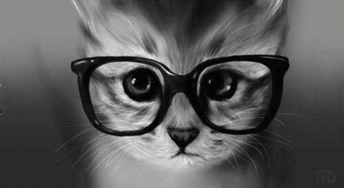 Cats with eyeglass