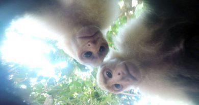 Monkey GoPro Camera