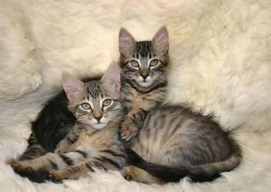 cats stare