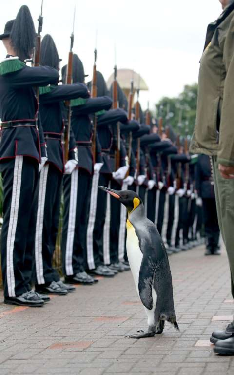 Sir Nils Inspecting the Soldiers