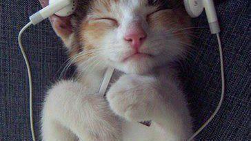 cats-listening-through-ipod
