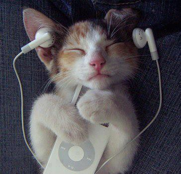 cats-listening-through-ipod