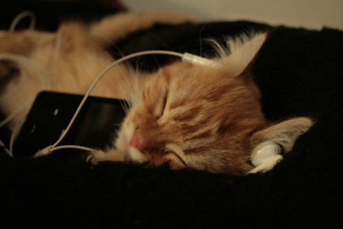 cats-listening-to-music