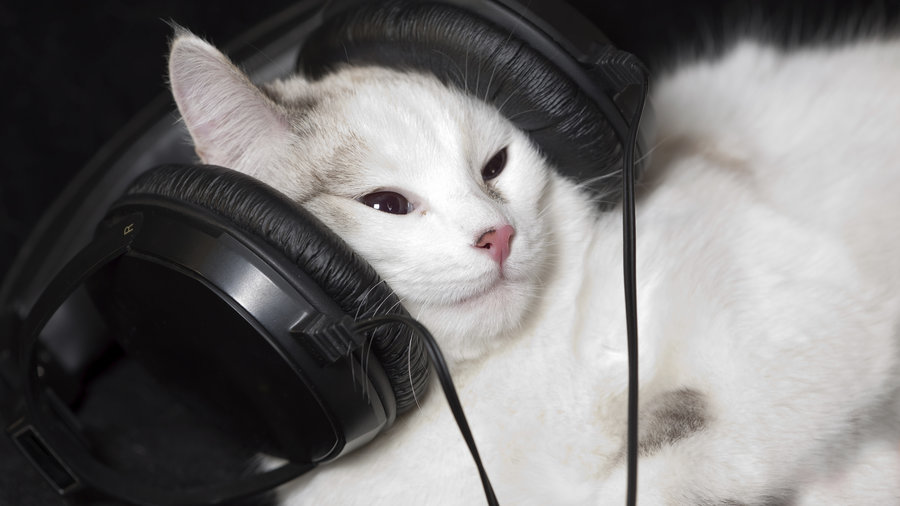 cats-listening-to-music-through-headset