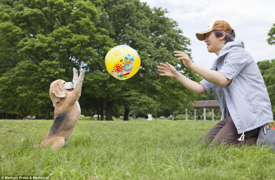 Purin Catch Balls