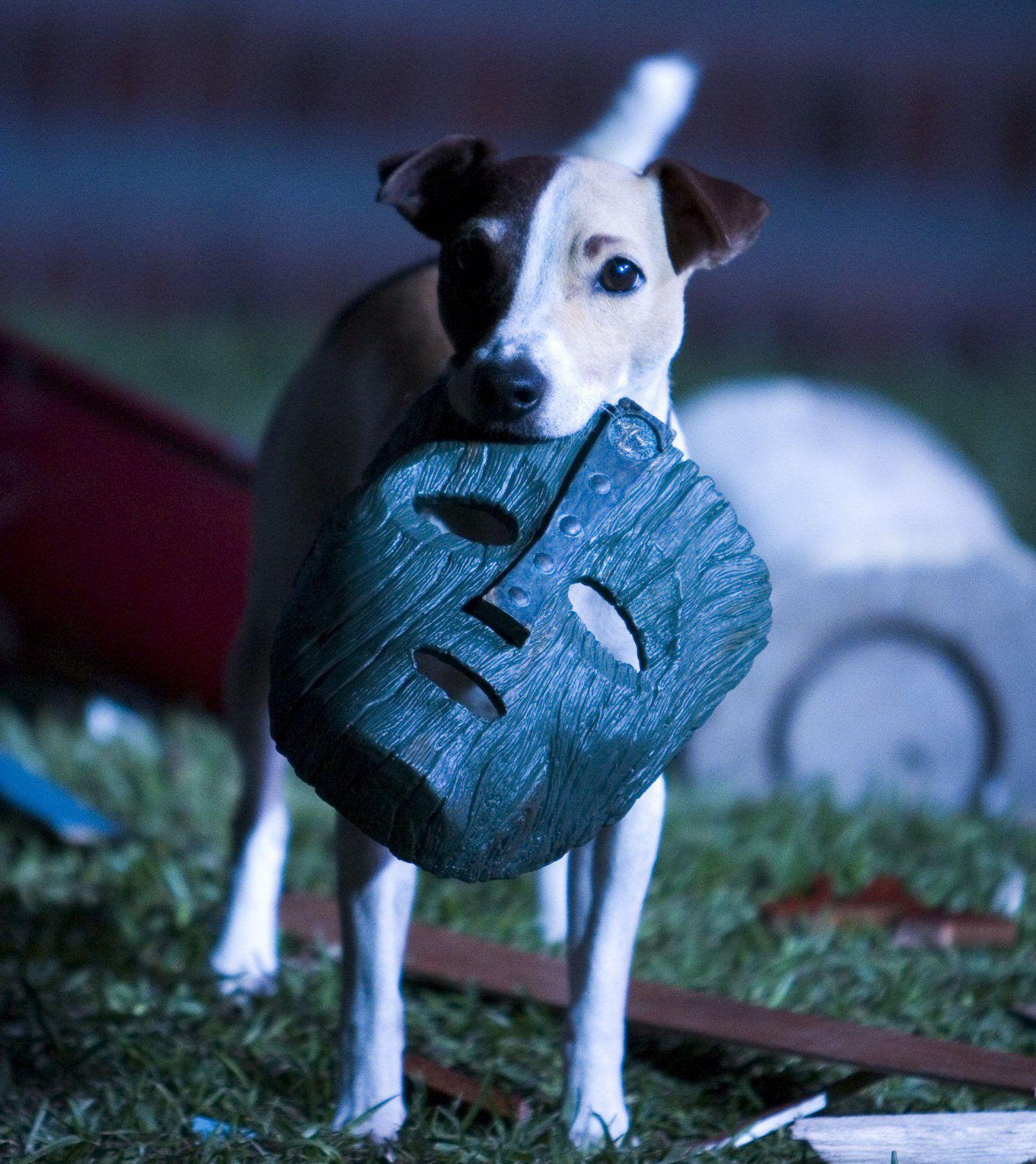 Milo Dog Movie