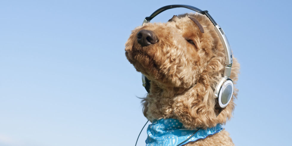 Dogs like listening to music