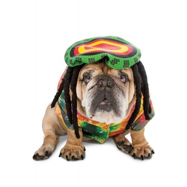 Pug likes reggae