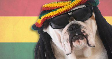 Reggae Dog