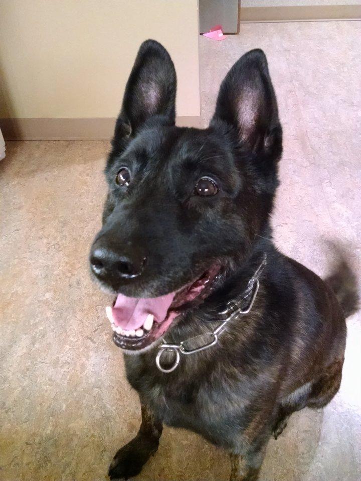 Spencer Police Dog