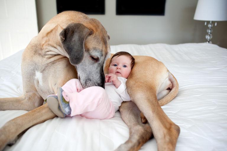 Baby sleeping on a dog