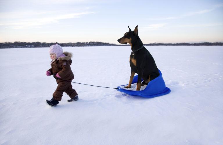 Baby pulling dog