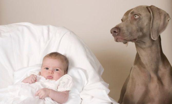Dog babysits