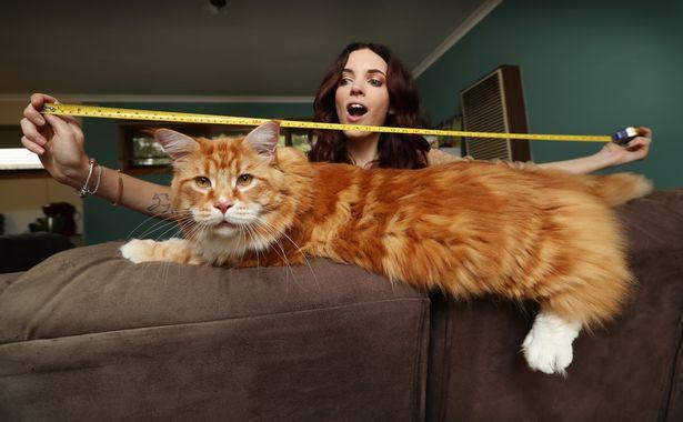 Omar measures 120cm