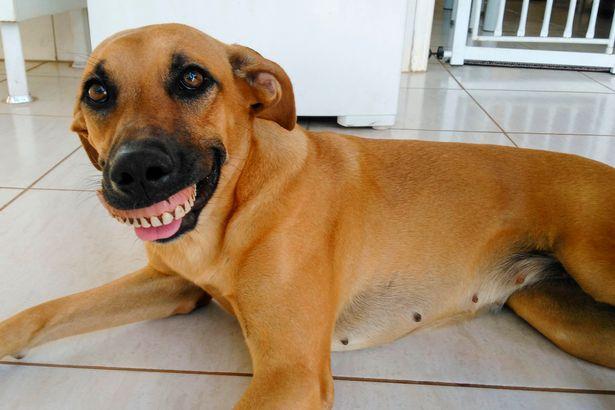 Pandora Discovered False Teeth
