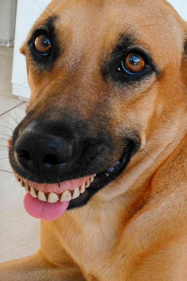 Pandora False Teeth