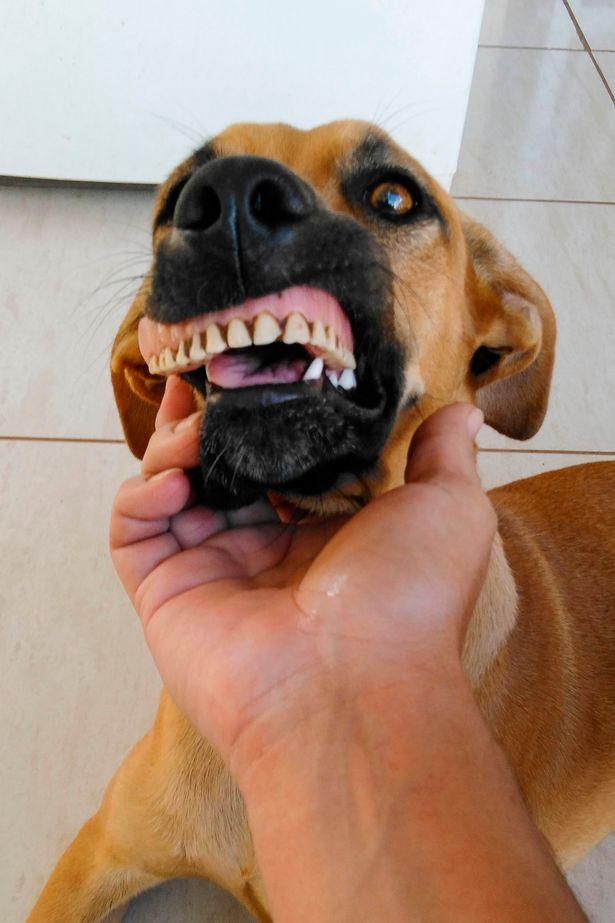 Pandora Wearing Human False Teeth