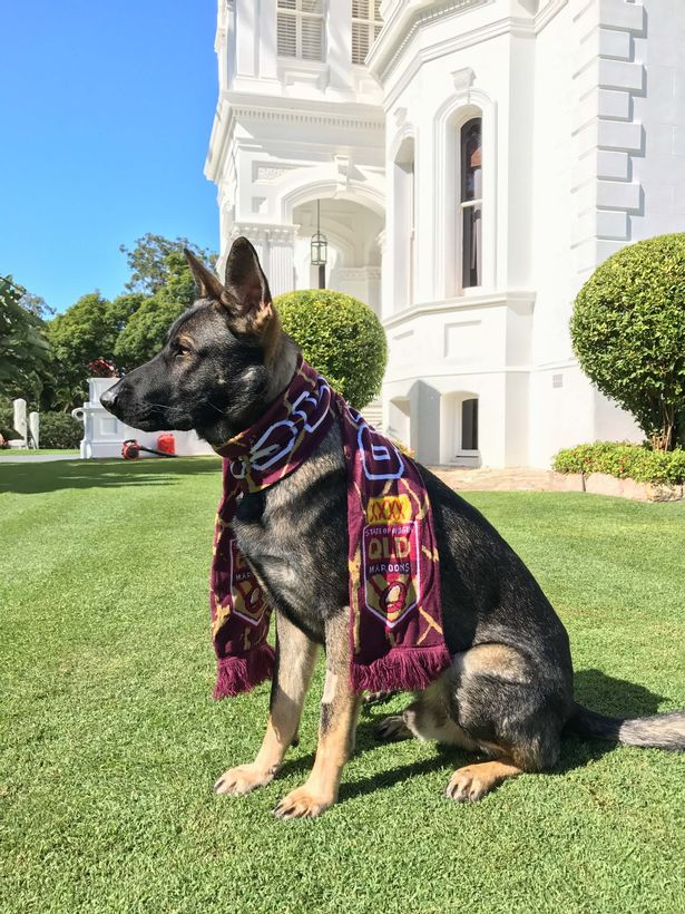 Gavel dons a maroon scarf