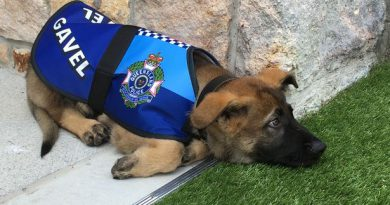 Gavel was fired from being a police dog