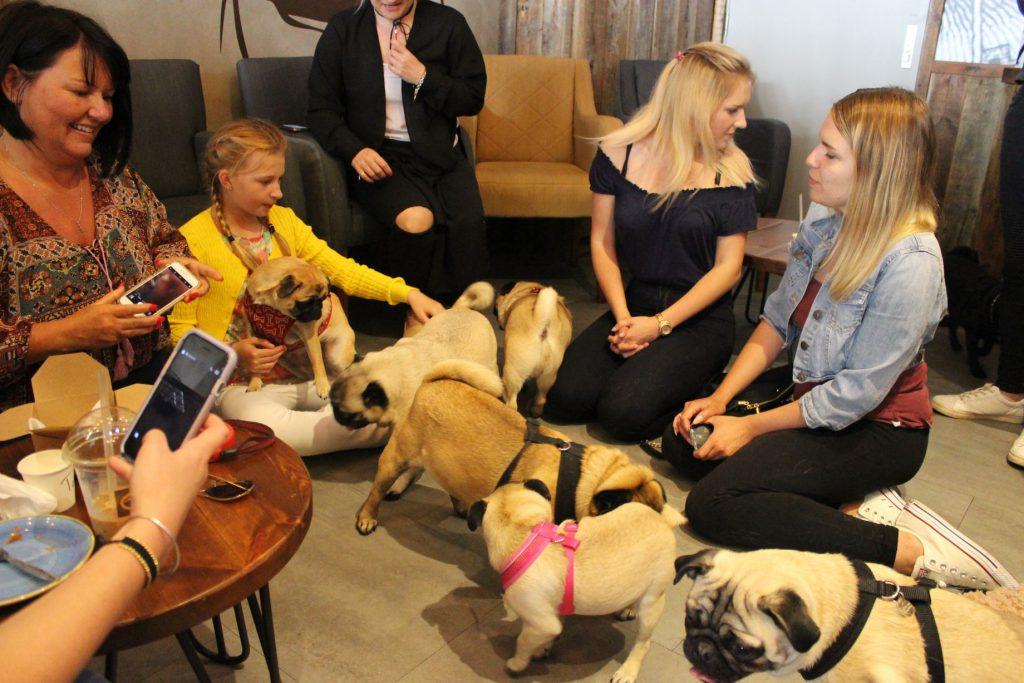 Pug Meet Up